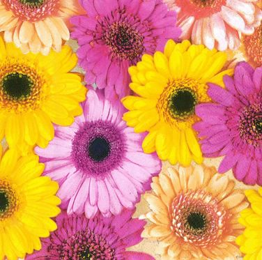 Ubrousek 33x33 cm - Colourful Gerberas Background
